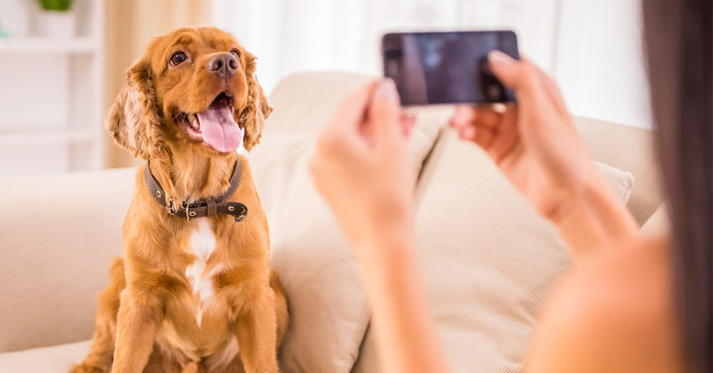 Check out our 8 favorite dog TikTok accounts
