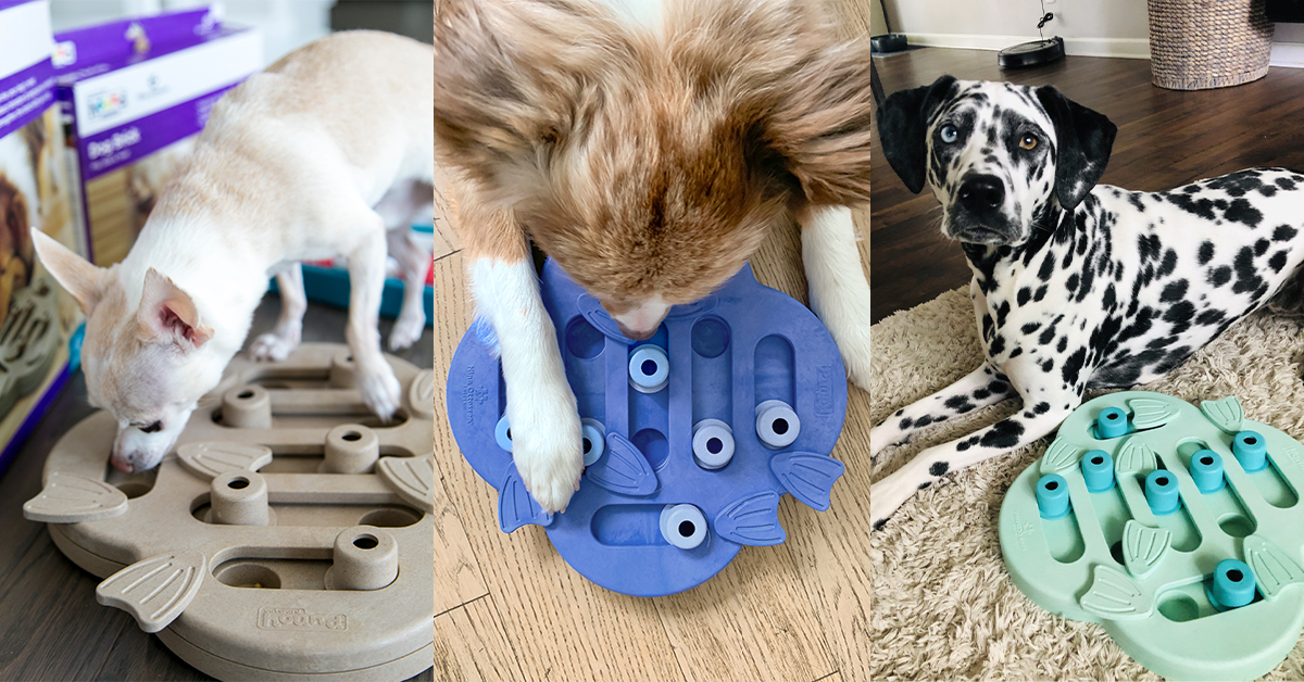 hide n slide mental stimulation for dogs