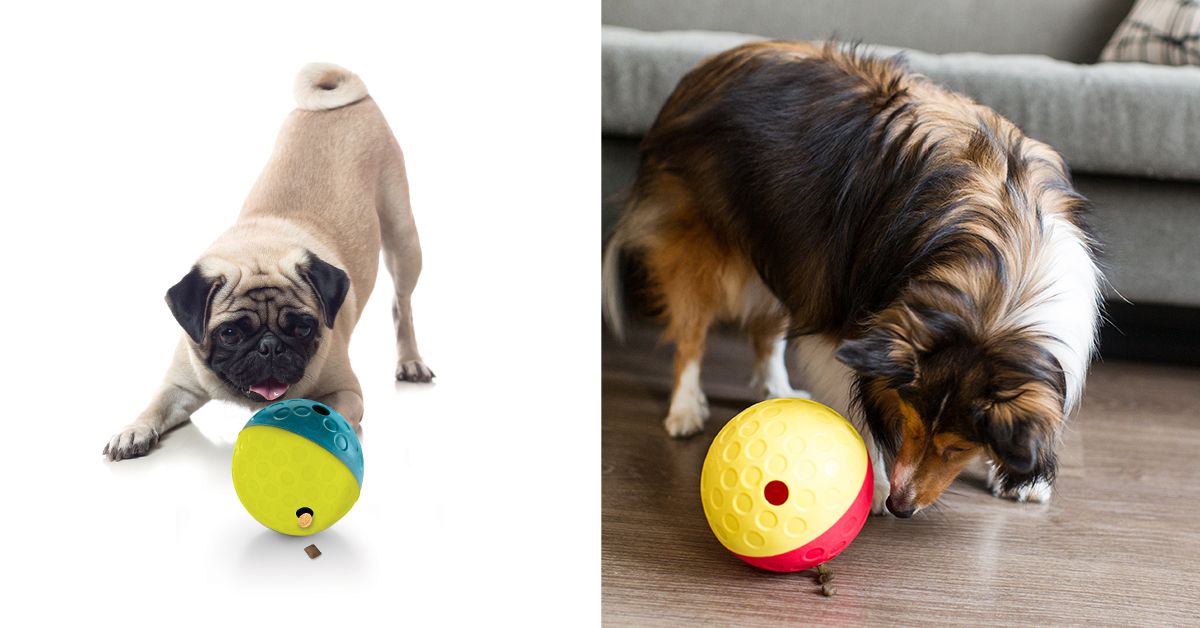 dog playing with treat dispensing ball toy