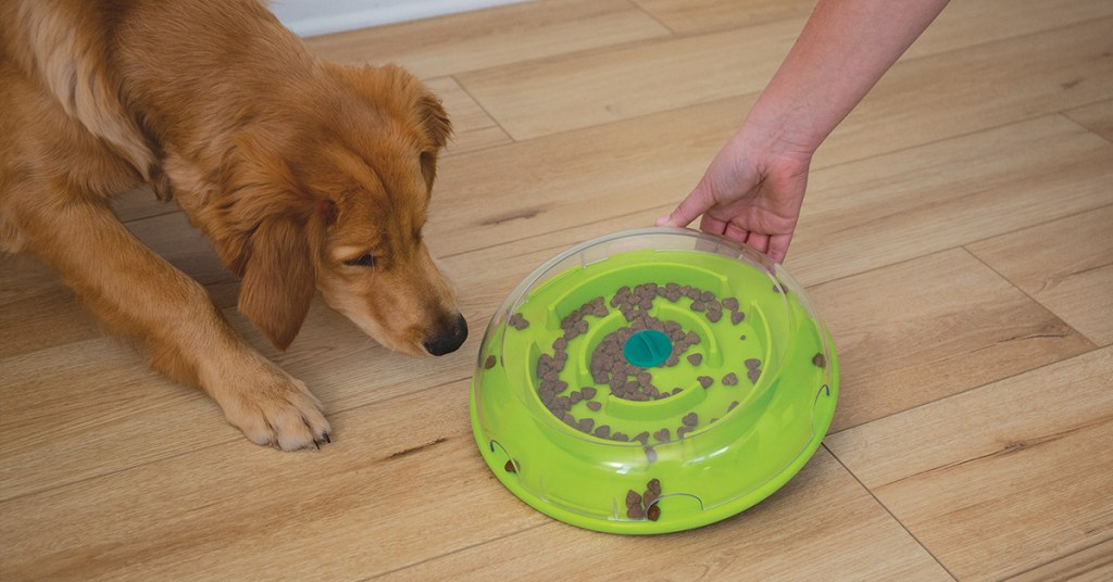 wobble bowl and dog