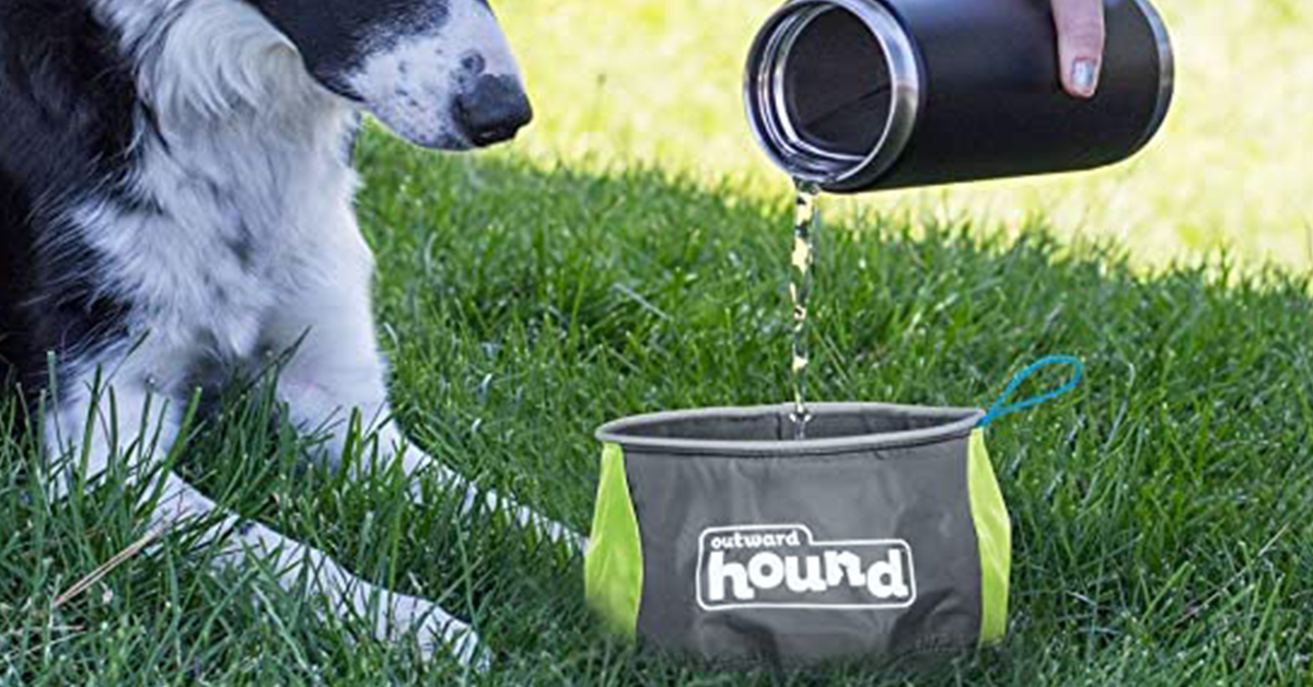 portable dog bowl