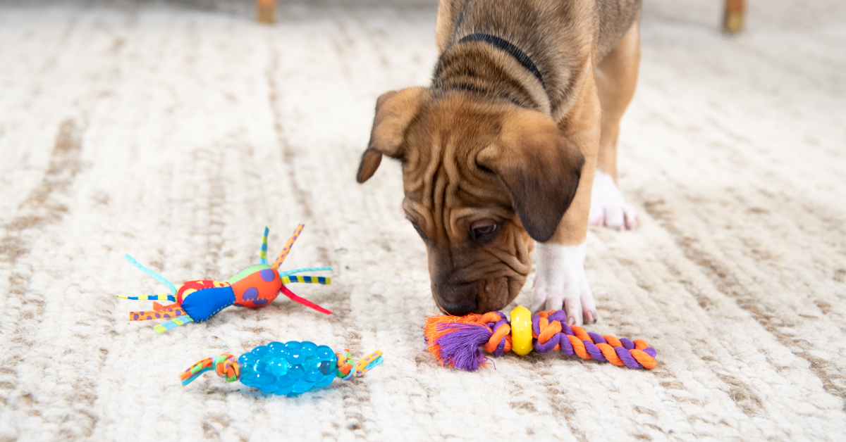 the-best-toys-for-puppies