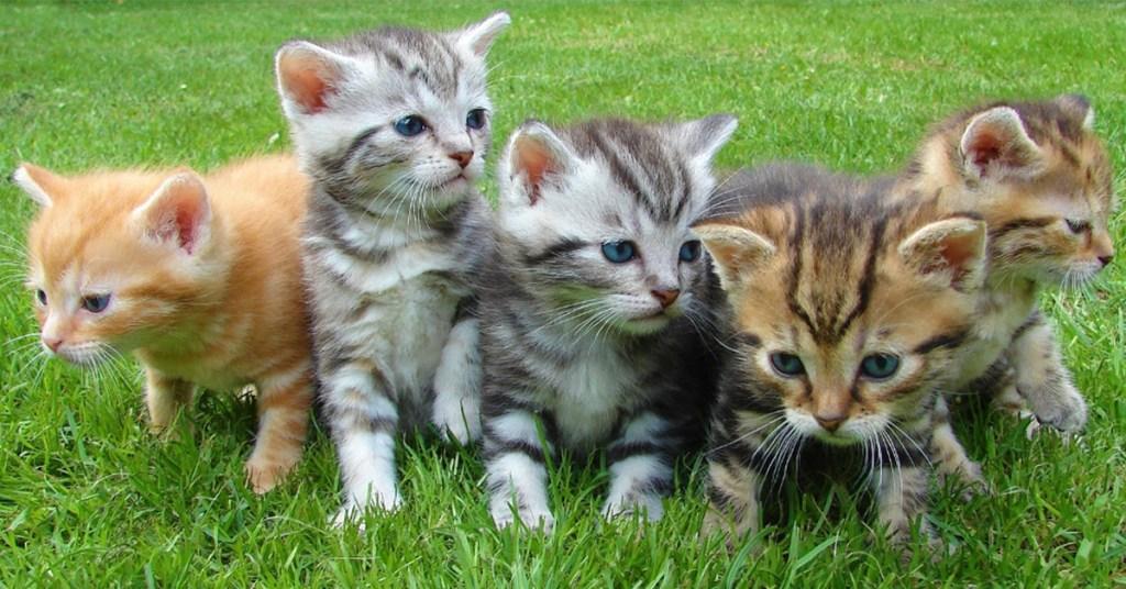 group of kittens gotcha day