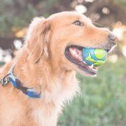 dog with earth ball