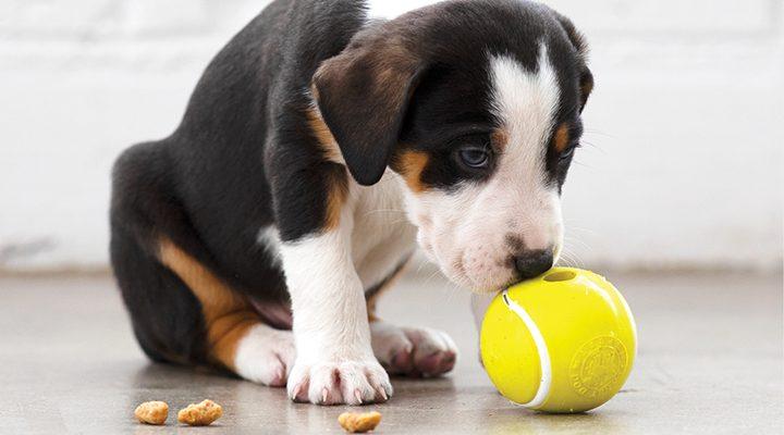 2020 Bestseller Planet Dog Orbee-Tuff Tennis Ball Yellow