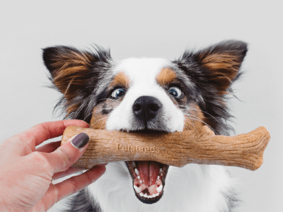 dog with a chew toy