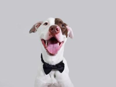 happy dog on his gotcha day