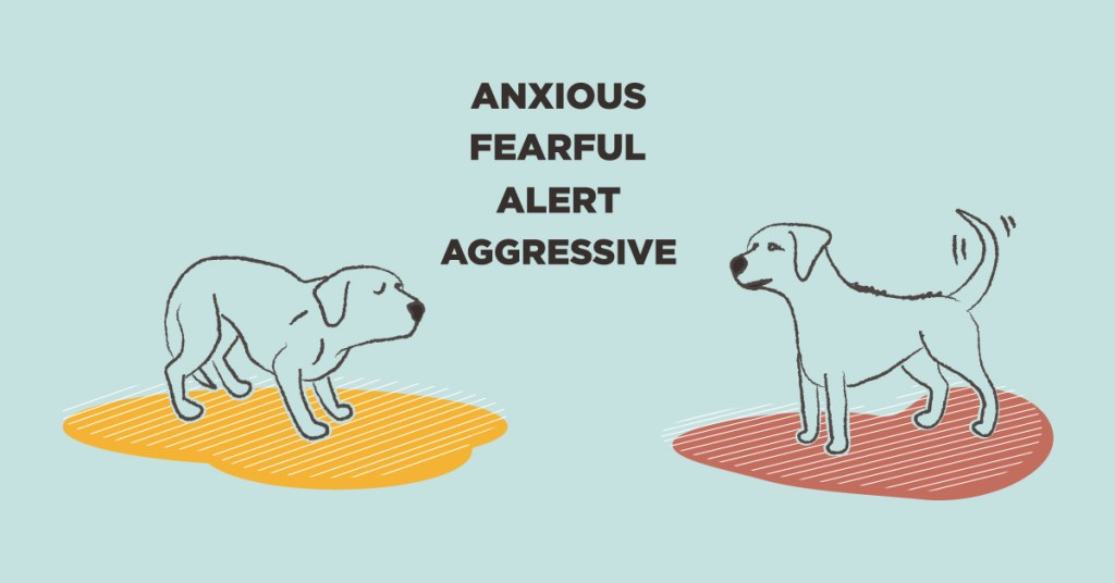 fearful and reactive dog body language