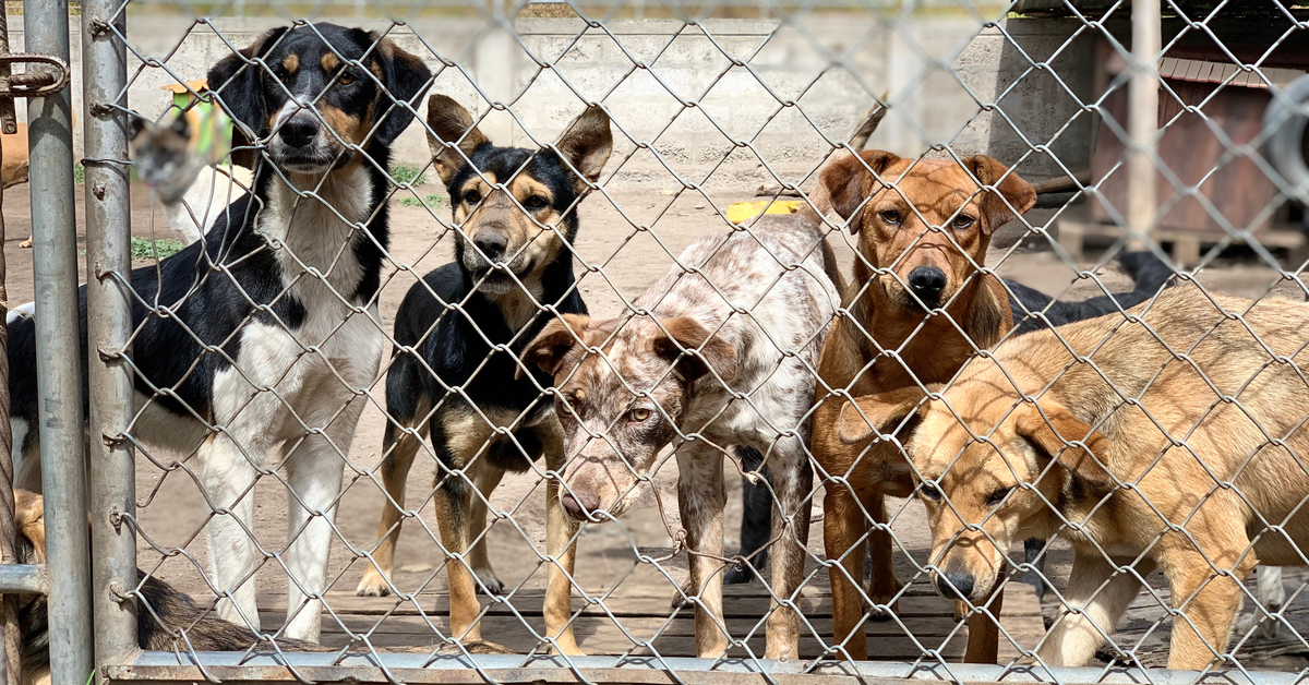 a group of shelter dogs