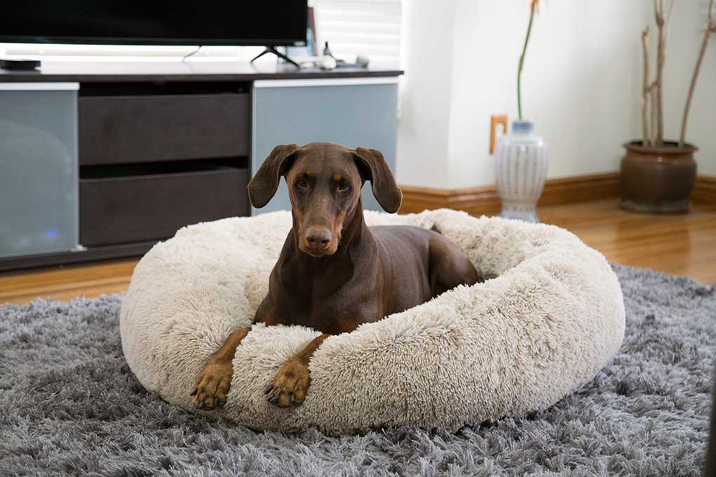 dog laying in a calming dog bed