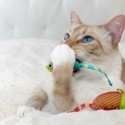 catnip mouse cat chew toys