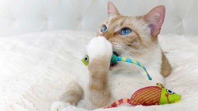 catnip mouse cat chew toys. best toys for bored cats