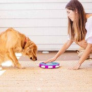 human helping dog with puzzle
