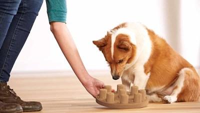dog smart puzzle puppy enrichment toys