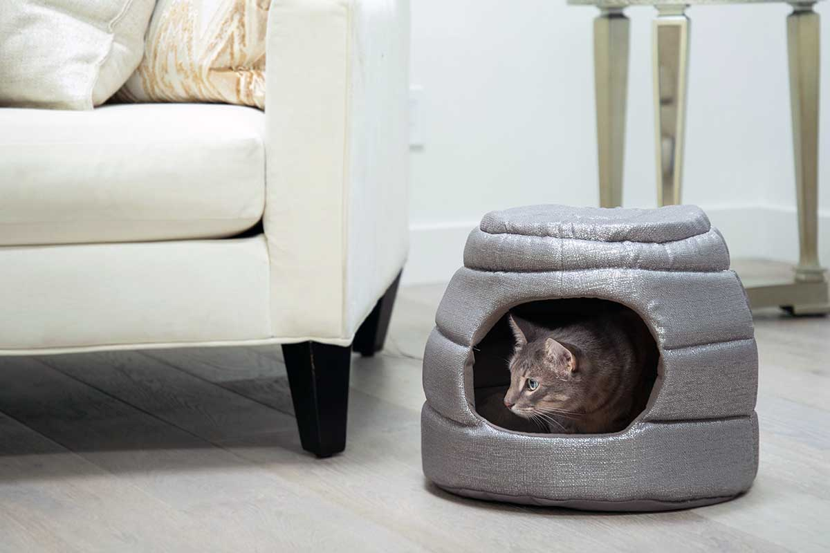 cat in a pet hut