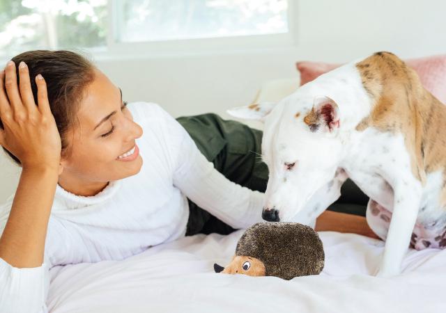 human and dog with hedgehog dog toy