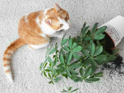 why do cats knock things over? cat with overturned plant