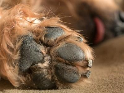dog paw protection, dog split nail