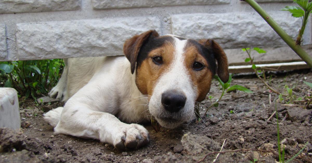 solutions dog digging under fence