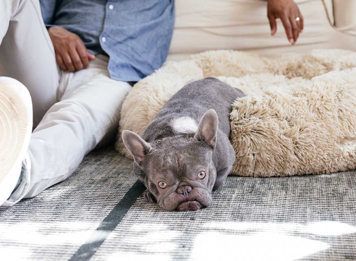 get well gifts for dogs calming dog bed
