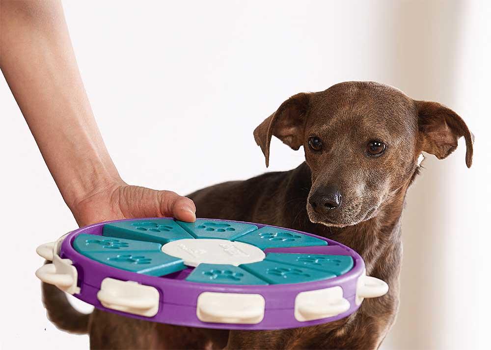 dog twister dog puzzle