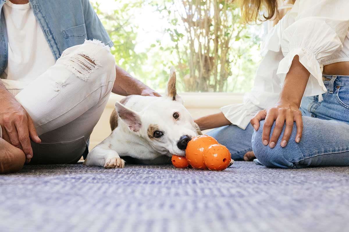 dog with planet dog diamond plate toy. toys for blind dogs