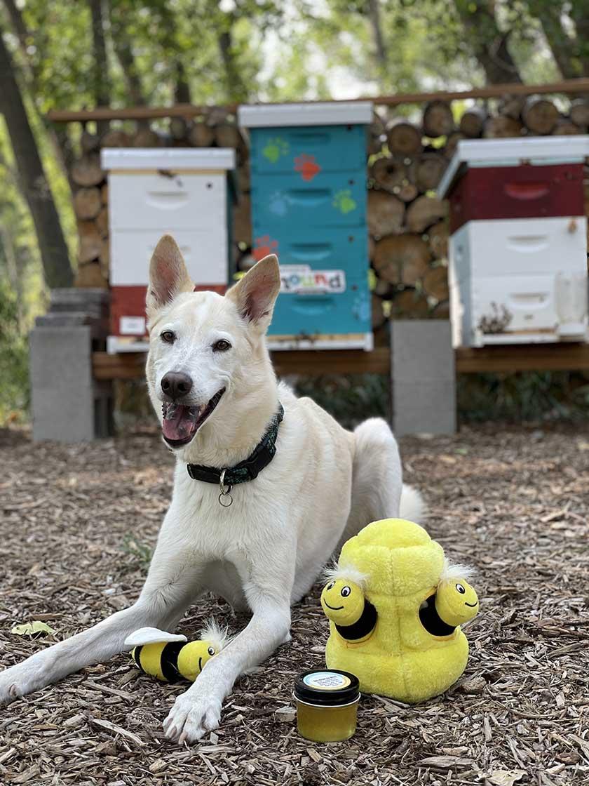 dog around beehives