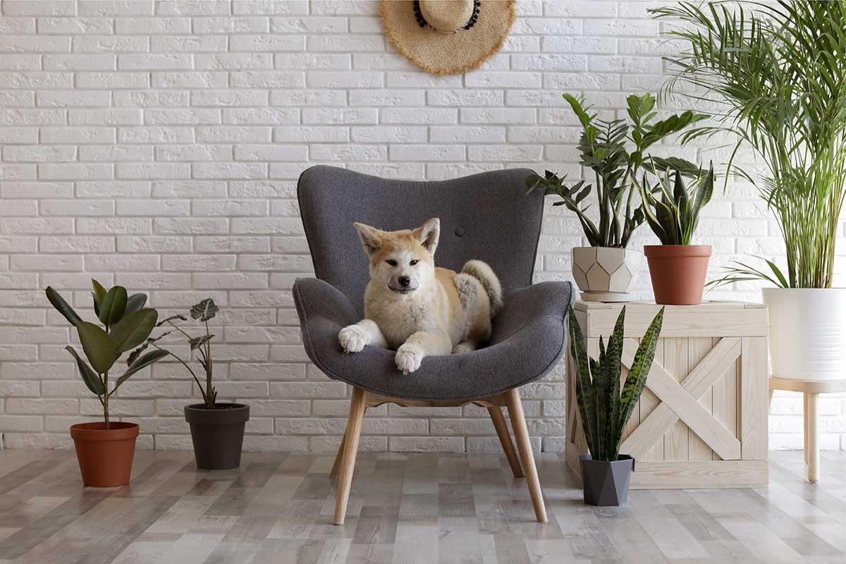 pet friendly indoor plants