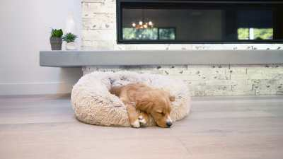 why do dogs twitch in their sleep
