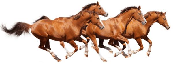 horsepng22550