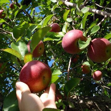 """""""Low-hanging fruit"""""""