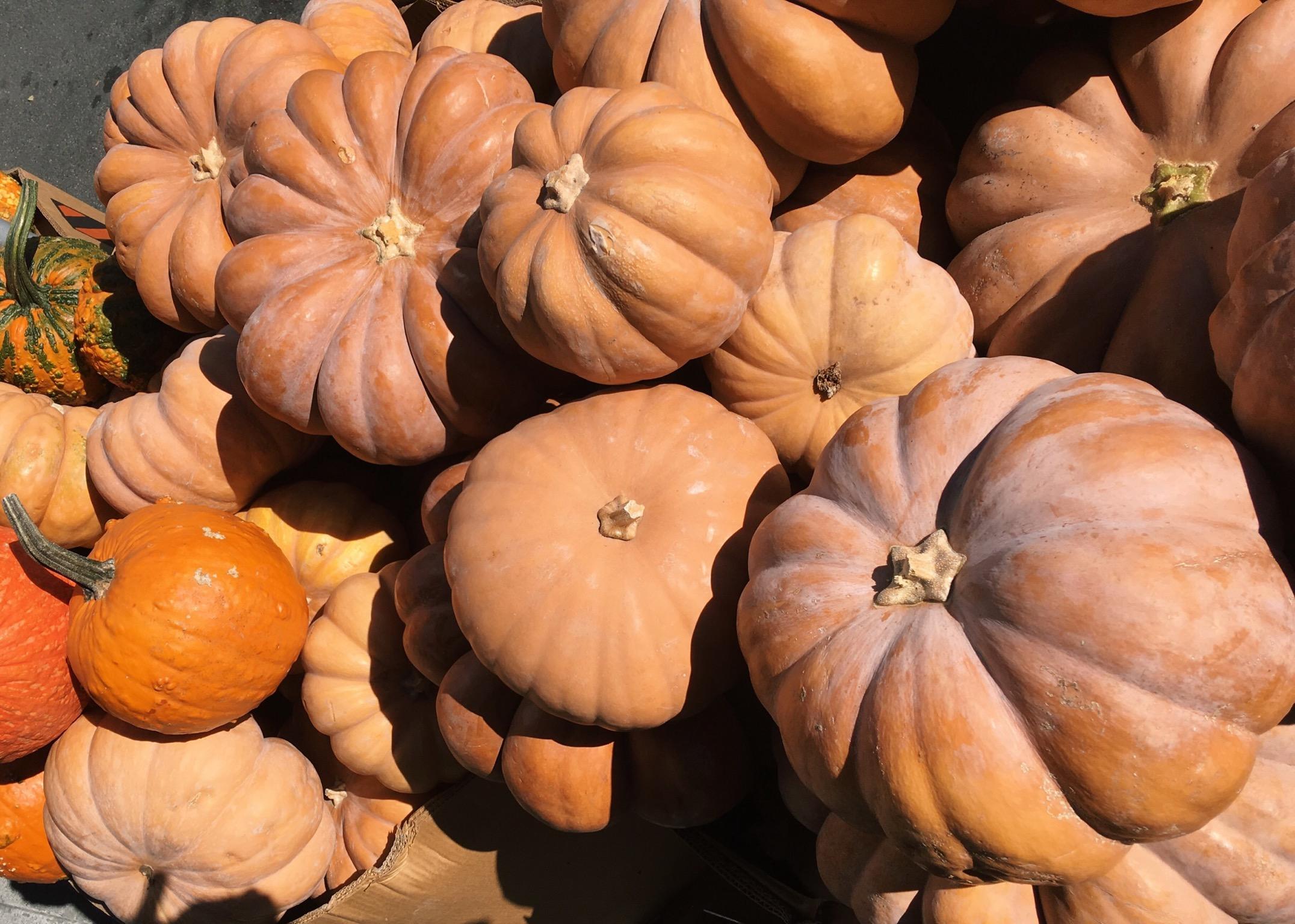 pumpkins, pumpkin, fairytale