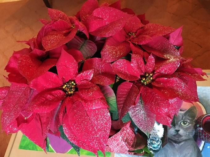 Christmas, plant, hoilday, poinsettia