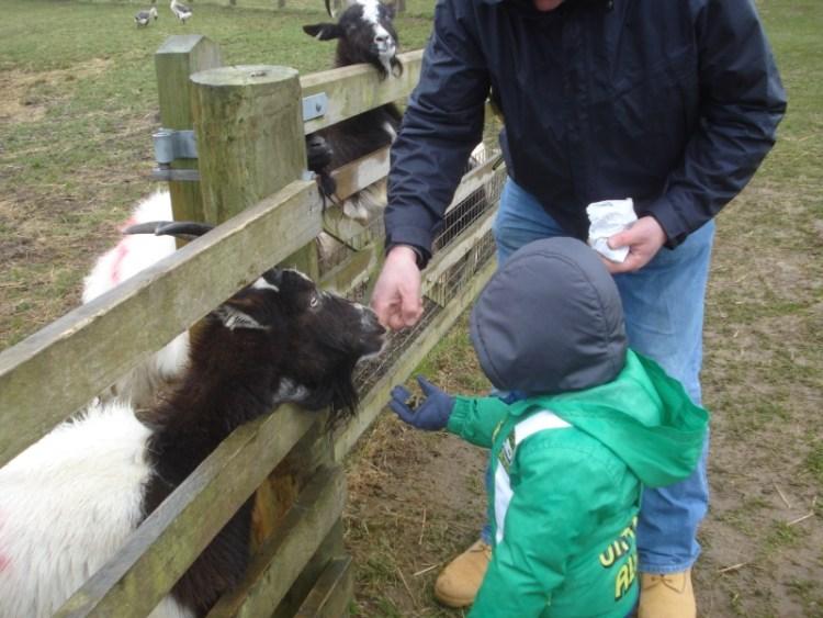 Hi Ho, Hi Ho It's off to the Farm we go - Cotswold Farm Park