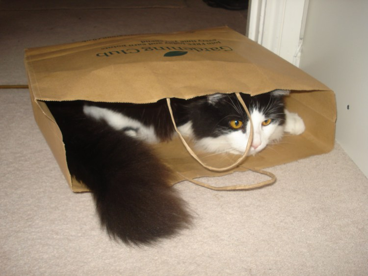 cat sat in shopping bag