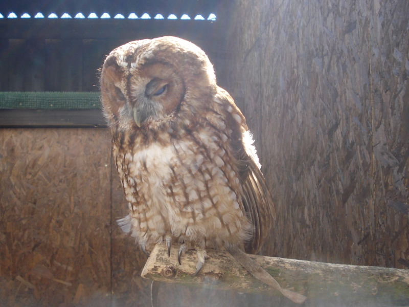 Falconry Centre at Millets Farm