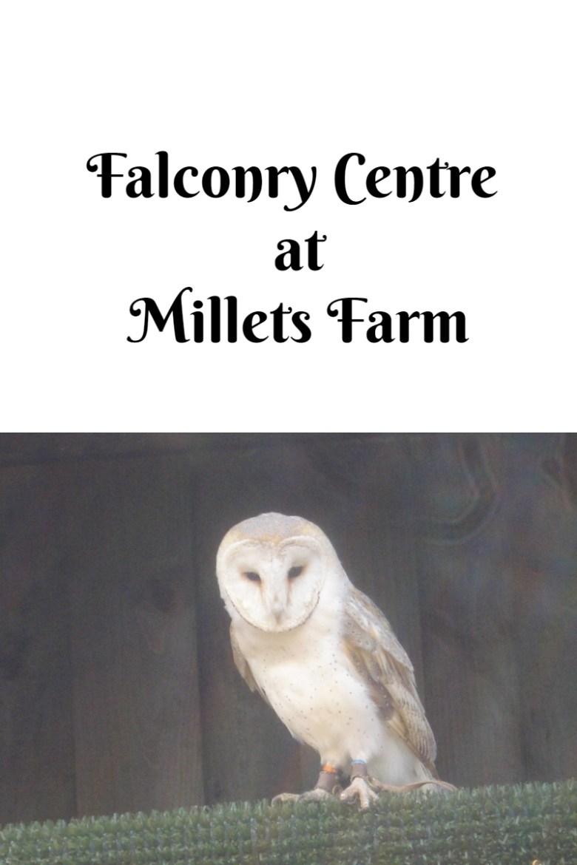 Falconry Centre at Millets Farm