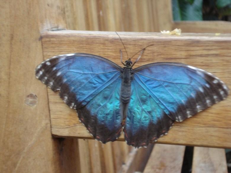 Flitter, Flutter, Butterflies - a visit to The Butterfly Farm
