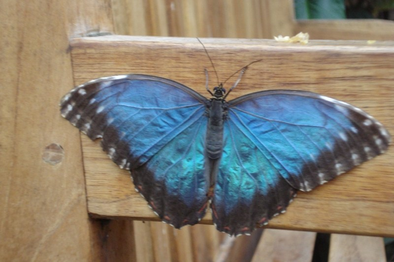 Flitter, Flutter, Butterflies - a visit to The Butterfly Farm