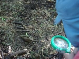 Earth Trust, Forest School, Bug hunting