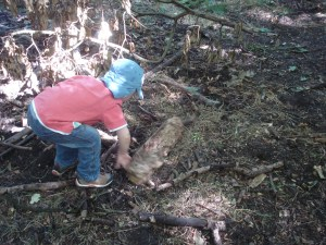 Forest School, Earth Trust, log pile house
