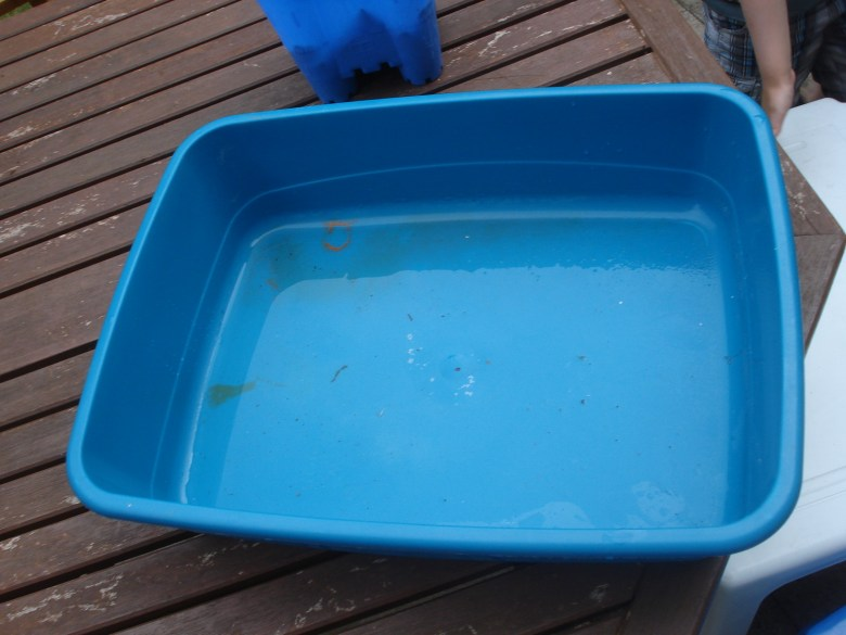 A cat litter tray soon to be pond