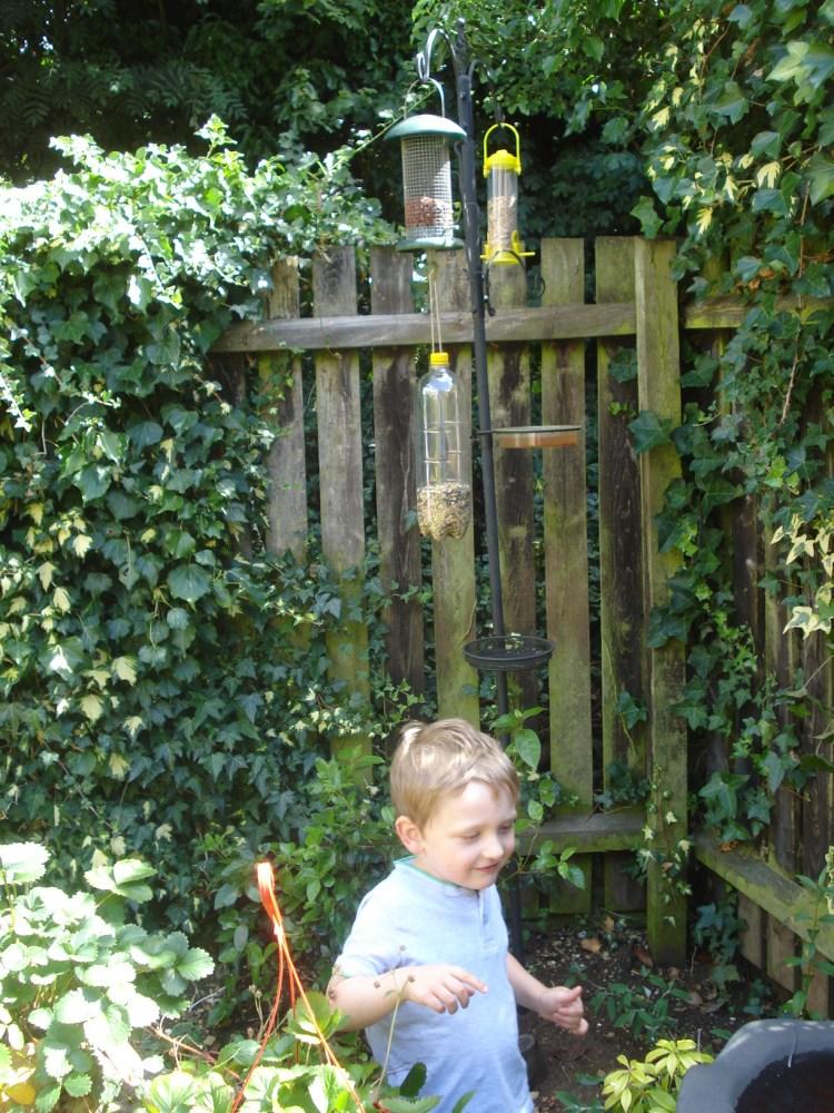 Bird feeding pole with feeders.bird feeders, feeding birds safely