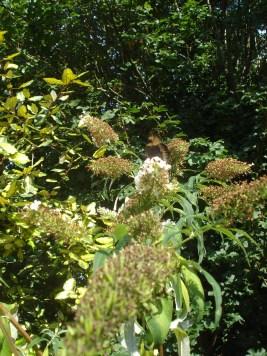 Create mini-habitats for birds, mammals and bugs