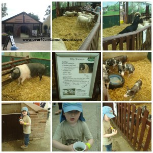 Hatton Country World, Hatton Adventure Farm