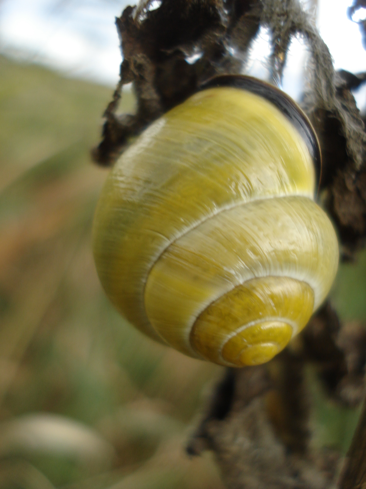 another snail hunt