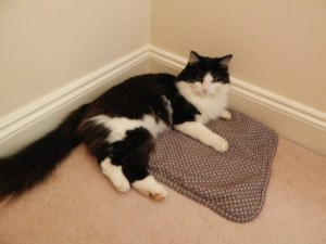 Pampering a cat with Pets at Home