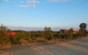 A Catalan Adventure