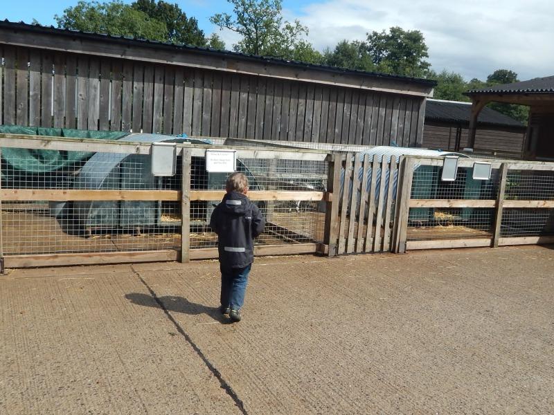 Bucklebury Farm Park