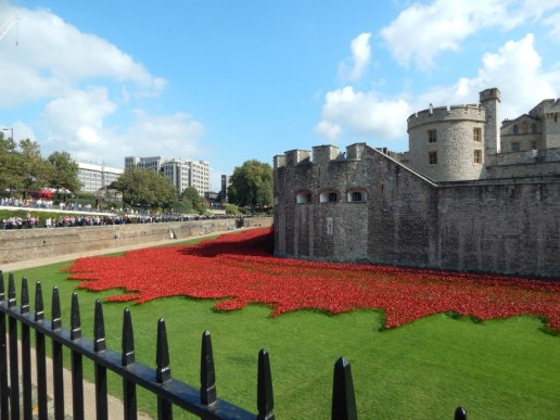 Visiting the #TowerPoppies